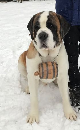 Picture for category Saint Bernard Barrels